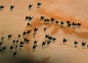 3-camel-shadows-from-above-aerial-george-steinmetz