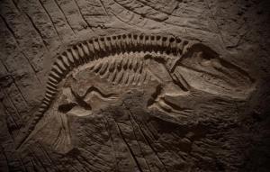 fossil-dino-fish-1