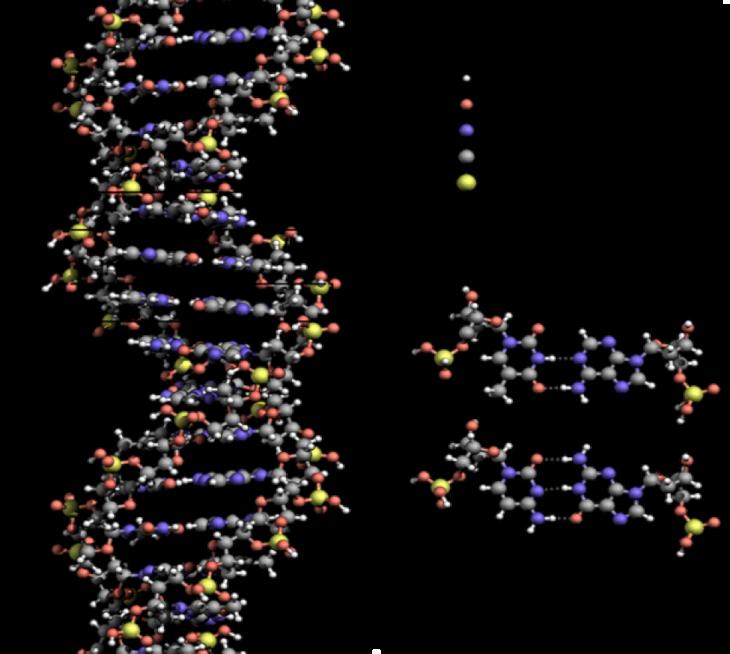 !!!DNA