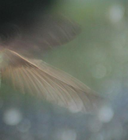 hummer0010_1012 wing
